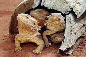 Alice Springs Reptile Centre - Kempsey Accommodation
