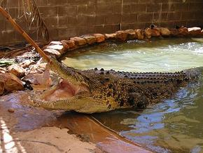 Wyndham Zoological Gardens and Crocodile Park - Kempsey Accommodation