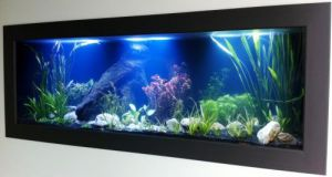 Aquariums in Cairns - Kempsey Accommodation