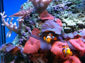 Tropical Marine Centre - Kempsey Accommodation