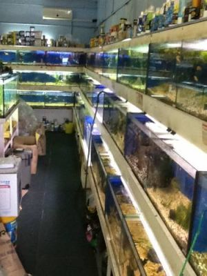Clearwater Aquariums - Kempsey Accommodation