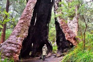 Margaret River Wineries Caves Ocean and Karri - Air  Ground Tour - Kempsey Accommodation