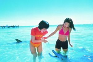 Monkey Mia Dolphins  Shark Bay Air Tour From Perth - Kempsey Accommodation