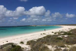 Abrolhos Island Half Day Fly and Flipper - Kempsey Accommodation